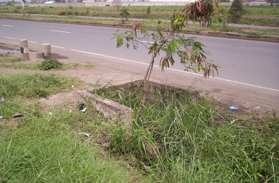 A tree growing out of a drainage system along a major highway in Nairobi, Kenya.
